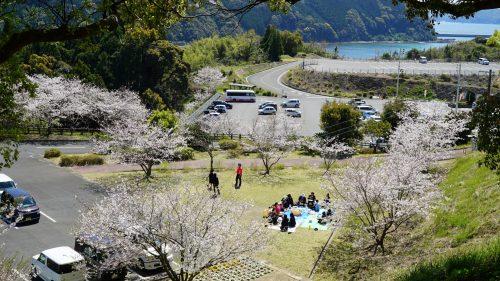 かどがわ温泉「心の杜」 門川町の桜名所