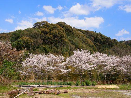西門川エリア 桜と風情ある景色