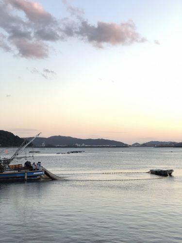 門川湾 稚鮎漁